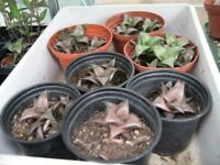 Various Types of Succulent Plants For Sale.