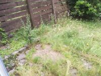Wanted: Someone to tidy an overgrown garden