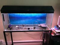 Clear seal aquarium 3ft x 1ft x15in.