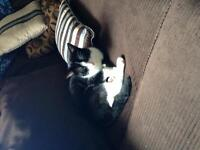Very affectionate male cat