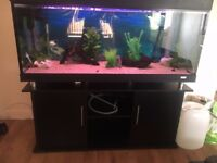 480 litre fish tank for sale with stand. FISH AVAILABLE AT EXTRA COST( ask for list)
