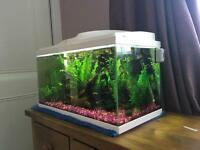 Tropical fish tank complete with heater filter plants etc