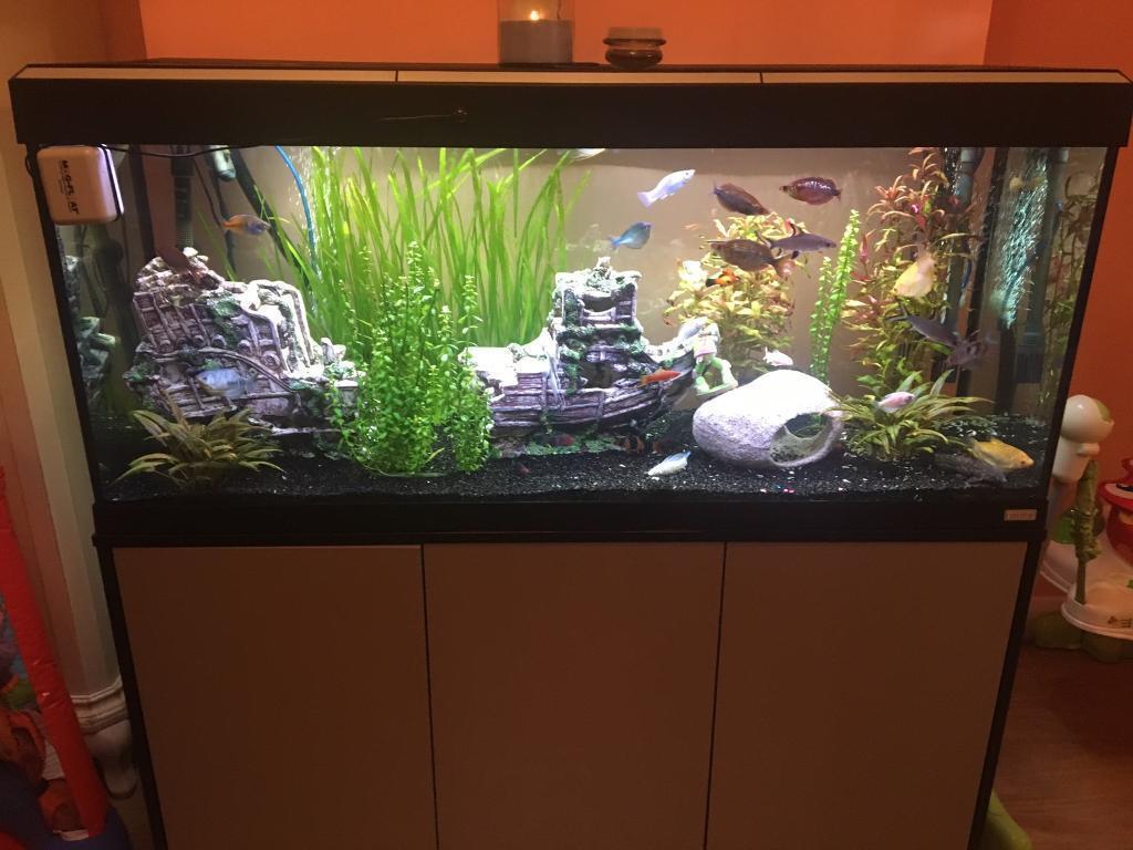 Fluval roma 240 aquarium fish tank - Fluval Roma 240 Tank