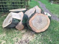 Oak trunk slices