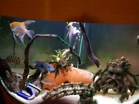 190 litre tropical fish tank
