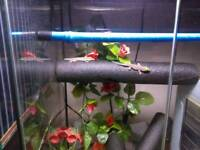 2 baby standing day gecko's