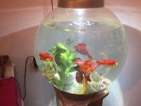 3 Beautirful Goldfish free to good home