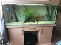 Rena 5ft fish tank