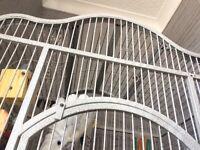 Friendly Umbrella Cockatoo