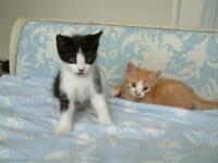 Beautiful Sleigh Bed frame - king size - kittens not included!