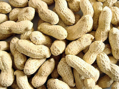 2 x 12.5KG MALTBY'S WILD BIRD PEANUTS IN SHELLS MONKEY NUTS  25kg total