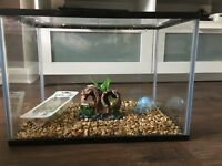 24 Litre fish tank with toys and live plant