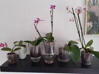 Orchid bundle
