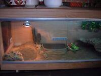 Tortoise home/s