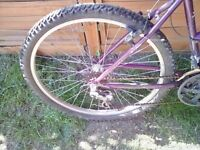 """26"""" Raleigh Max Ladies Mountain bike for sale"""