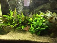Around 12-15 tetra fish + small algae catfish + plants!!