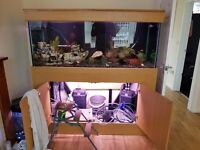 5x2x2 tank and cabinet