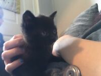 Female black kitten if interested give me a text 07835373976