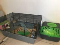 2 roborovski hamsters brothers with cage and everything that's needed