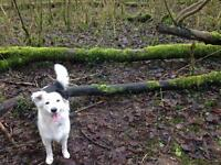 Experienced and professional Norwich dog walker