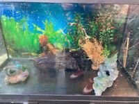 Aquarium Fish Tank For Sale/ Can Deliver