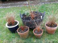 5 Pots with Grasses Cost £70 Only £5