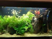 Aquarium maintenance services