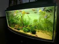 5ft bowfront aquarium