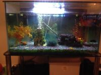 Fish 🐟 tank for sale with every thing