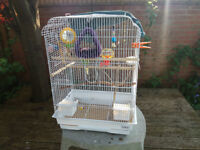 Two budgies including cage and accessories.