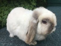 Stunning female rabbit