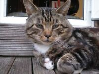 **URGENT MISSING CAT** Misti Missing Since March PLEASE HELP!!!!