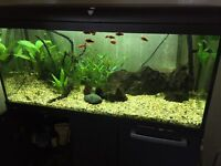 160 Litre Tropical Fish Tank, Cupboard, Fish and ALL Accessories