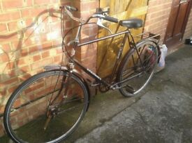 One adult Princes hybrid bicycle 3 gear