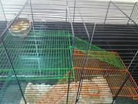 Dwarf hamsters and a gerbil