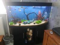 Fish tank and stand or just stand and tank £80