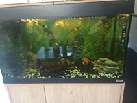 125L Tropical Fish Tank, Full Set up, on stand, Fish