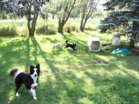 Dog Boarding and Daycare