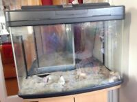 70L fish tank