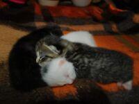 3 Kitten looking forever loving home