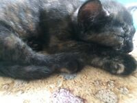3 beautiful kittens