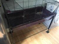 Purple rabbit hutch