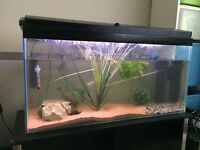 3ft fish tank full setup with stand