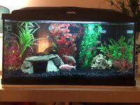 Established aquarium for sale