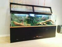 Large reptile tank with stand