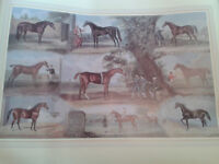 Father of the American Turf Horse Poster.