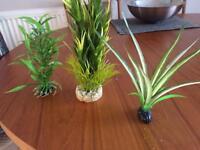 Fish tank plants