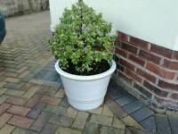 Garden pot LARGE!