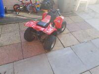 Quad 50cc thunderkat
