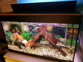 Fluval Roma 125 aquarium with Fluval 406 external filter with fishes